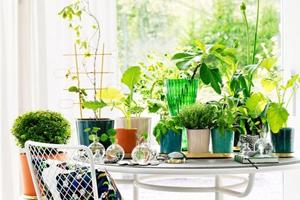 绿植家居设计